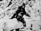 BigFootIsBlurry's Avatar